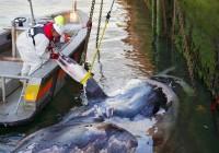 Robert Leśniakiewicz przedstawia: Raport: Zanieczyszczenie plastykami Wszechoceanu sięga krytycznego poziomu