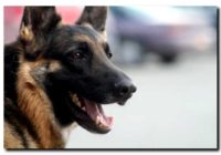 Tuchola. Przyczyną protestu mieszkańców dwóch ulic są… policyjne psy?