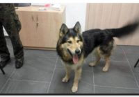 Policjanci proszą o pomoc mieszkańców Tucholi w ustaleniu właścicieli psów