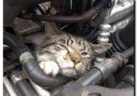 Wspólnie uratowali kotkę. Uwaga!!! Zimą koty chronią się pod maskami samochodów!