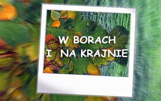 """Zapraszamy do obejrzenia """"W Borach i na Krajnie"""". Żołnierze Wyklęci."""
