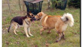 Zaginęły dwa psy, znalazca otrzyma nagrodę!