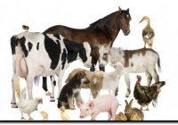 UWAGA! Informacje B.WAŻNE dla hodowców trzody chlewnej i drobiu!!!