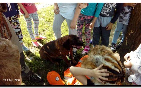 Szczepienia psów i kotów przeciwko wściekliźnie w GMINIE LUBIEWO