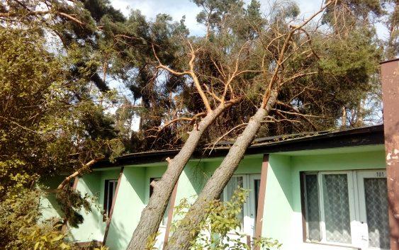 Zakaz użytkowania budynków i straty w lasach – dwa spotkania w UM Tuchola
