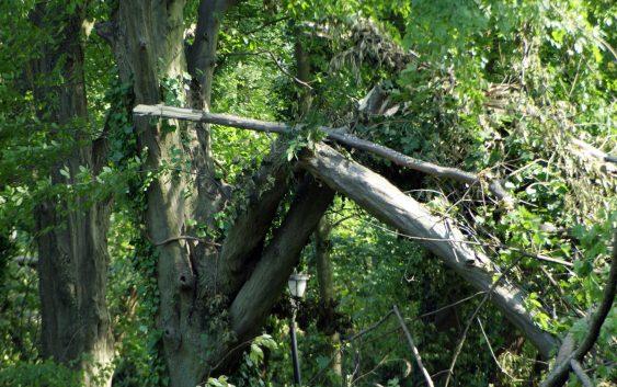 Zakaz wstępu do parków i lasów stanowiących własność Gminy Kęsowo