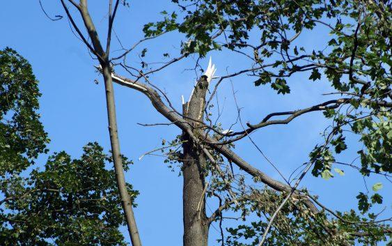 Ważne dla właścicieli lasów zniszczonych w nawałnicy