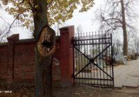 Przyrodniczy fenomen w Tucholi! Przy cmentarzu rośnie drzewo, które pochłania toksyczne śmieci!