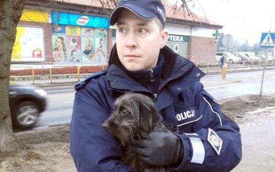 Dzięki wrażliwości dzielnej tucholanki, nasi policjanci i strażacy uratowali psa