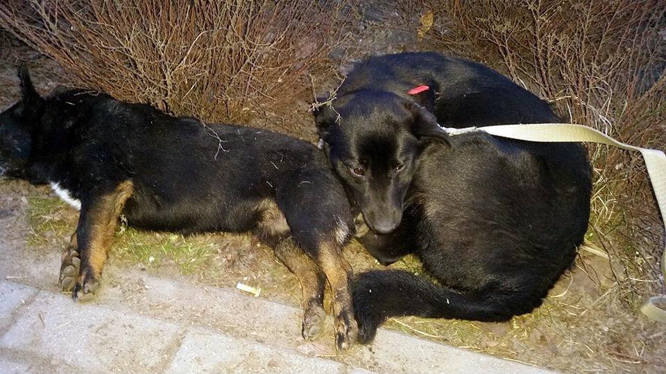 Listy od Czytelników. Czy w sprawie zwierząt również mieszkańców Cekcyna dotknęła znieczulica?