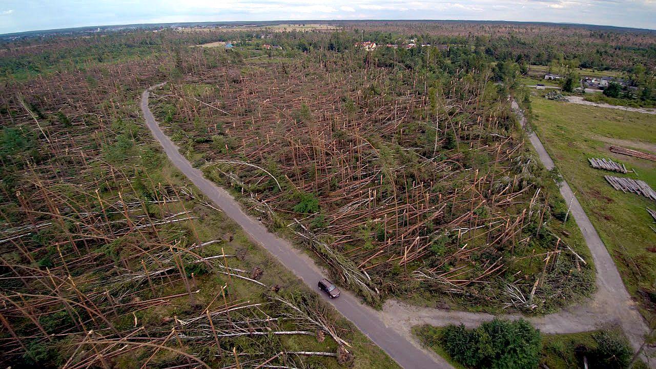 Akcja społecznego sadzenia lasu w Nadleśnictwie Rytel