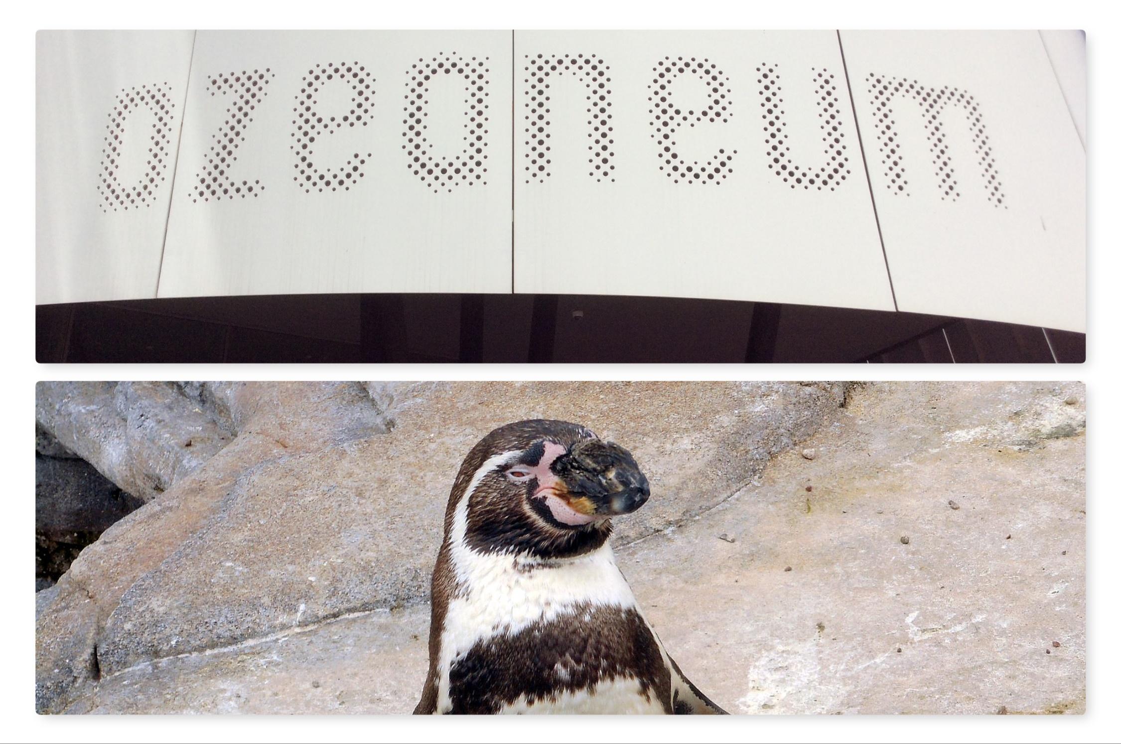 TOKiS – PRESS w STRALSUNDZIE. OZEANEUM – pingwiny Humboldta